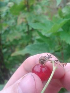 07 pickingfruit