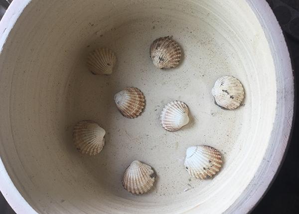 she sells seashells by the sea shore